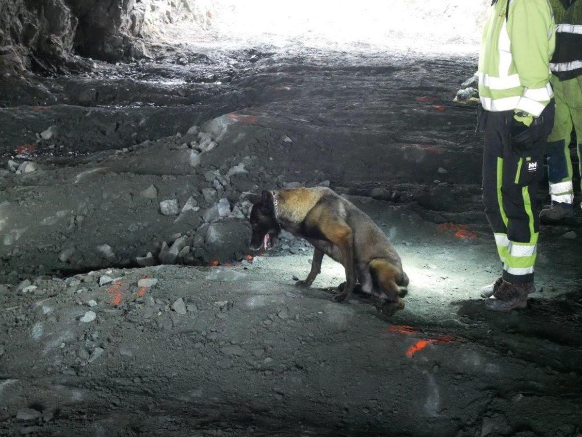 Hunder har markert ti steder med eksplosivrester under arbeidet. Foto: Walter Hjelvik/Statens vegvesen