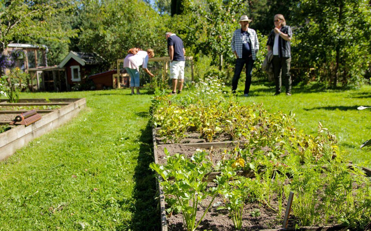 En rekke hageeiere over hele landet åpner portene for publikum på 1000 åpne hager. Foto: Jens Fremming Anderssen