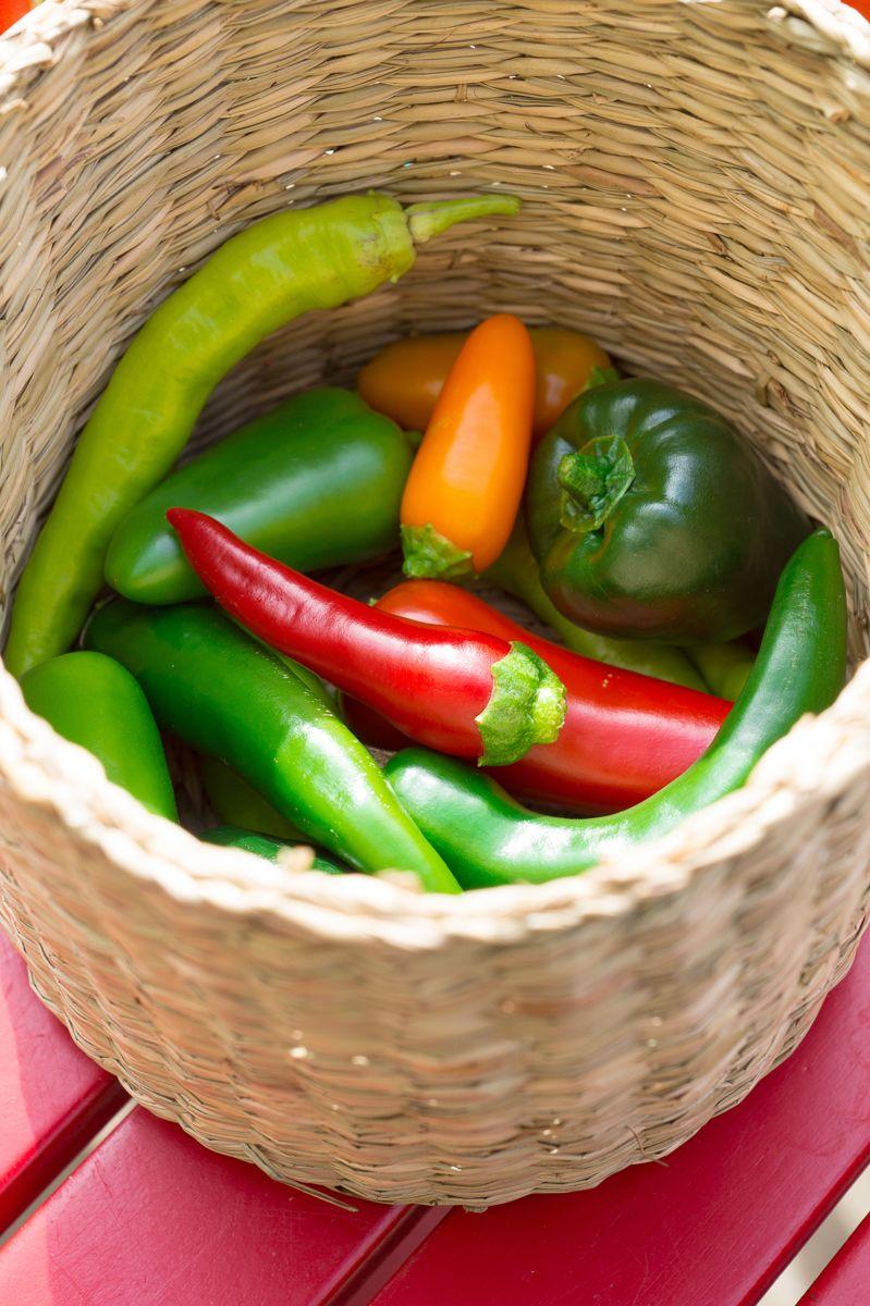 Du trenger ikke stor plass for å dyrke egne grønnsaker. Dette er chili og paprika fra Helene Gallis' avling på balkongen. Foto: Monica Løvdahl