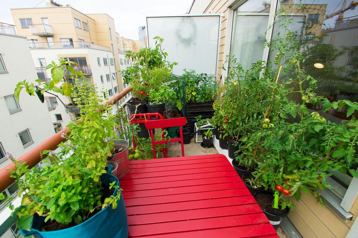 Du trenger ikke stor plass for å dyrke egne grønnsaker. Dette fra balkongen til Helene Gallis på Grønland i Oslo. Foto: Monica Løvdahl