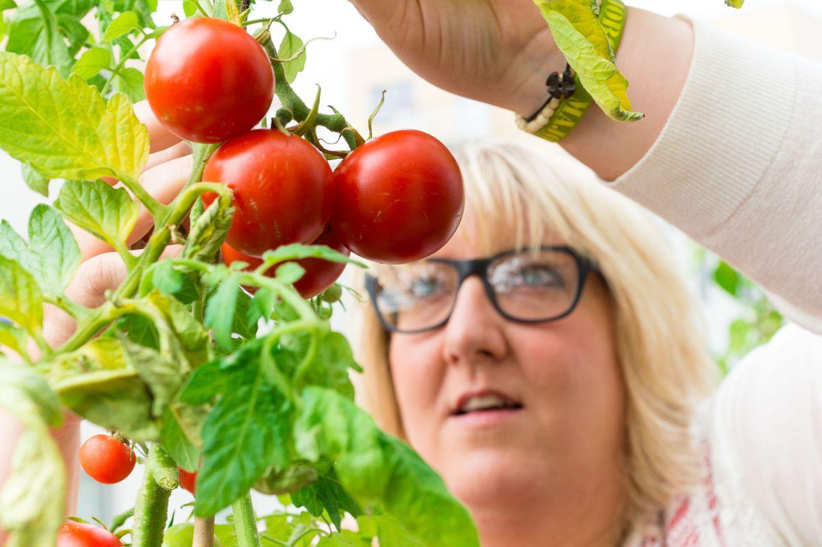 - Det er noe eget ved å nyte selvdyrkede grønnsaker, og tomater er enkle å få til, sier bydyrker og forfatter Helene Gallis. Foto: Monica Løvdahl