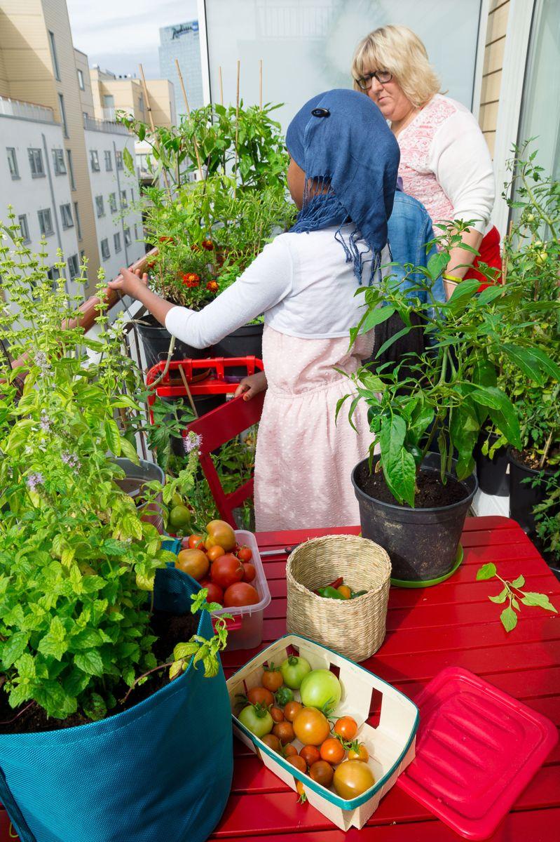 Selv på liten plass kan man få en stor avling grønnsaker. Foto: Monica Løvdahl