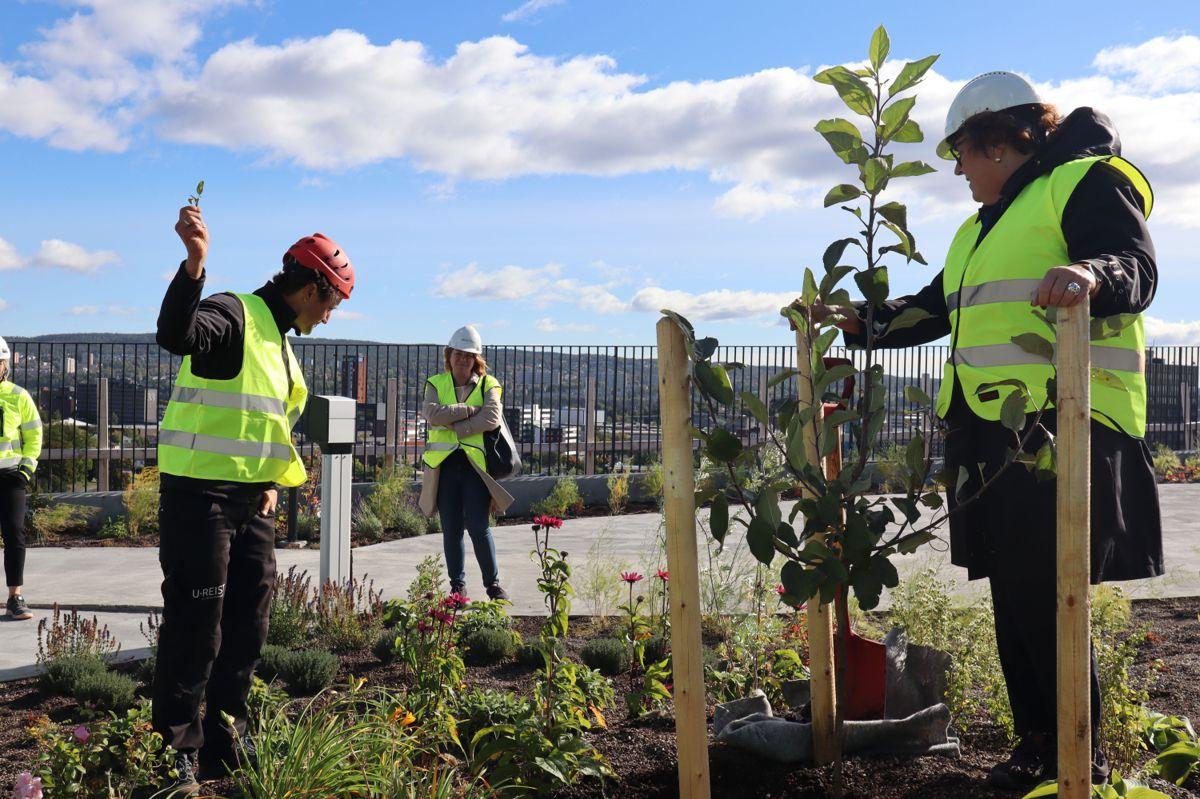 Landbruksministeren plantet et tre på taket, med assistanse av daglig leder Andreas Capjon i U.reist. Foto: Svanhild Blakstad