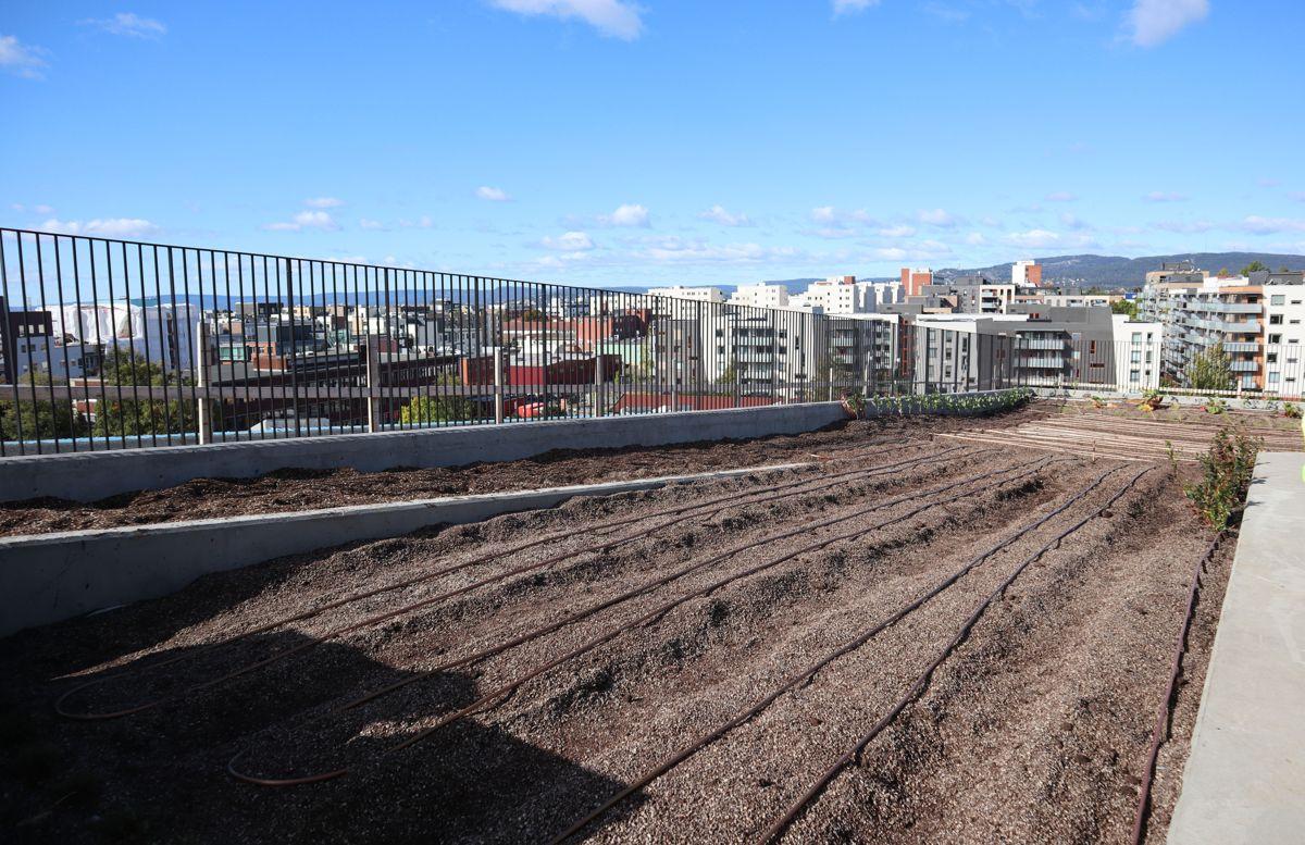ØKERN PORTAL: Her skal det dyrkes i høyden, bokstavelig talt på byens tak. Foto: Svanhild Blakstad