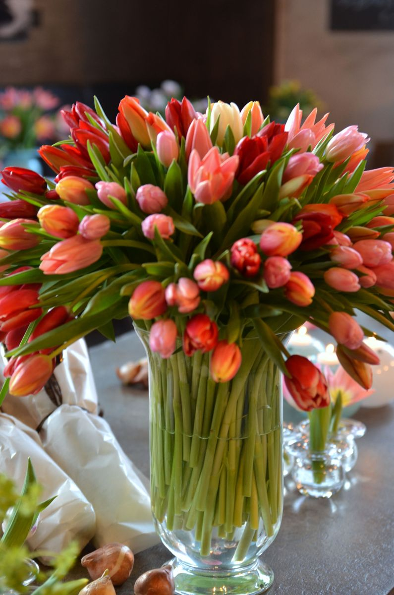 Tyvstart våren med tulipaner! Foto: Plantmania