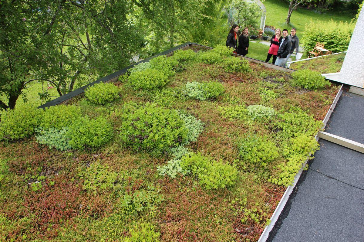 <p>FORDRØYNING: Bruk av grønne tak har lang tradisjon i Norge er tiltak som bidrar til at vann holdes tilbake eller forsinkes. Bildet viser artikkelforfatter Bent C. Braskeruds grønne tak som er plassert på garasjen på Nordberg i Oslo og som sammen med spesielle «regnbed» utgjør hans eget, private fordrøyningsanlegg. (Foto: Svanhild Blakstad)<br></p>