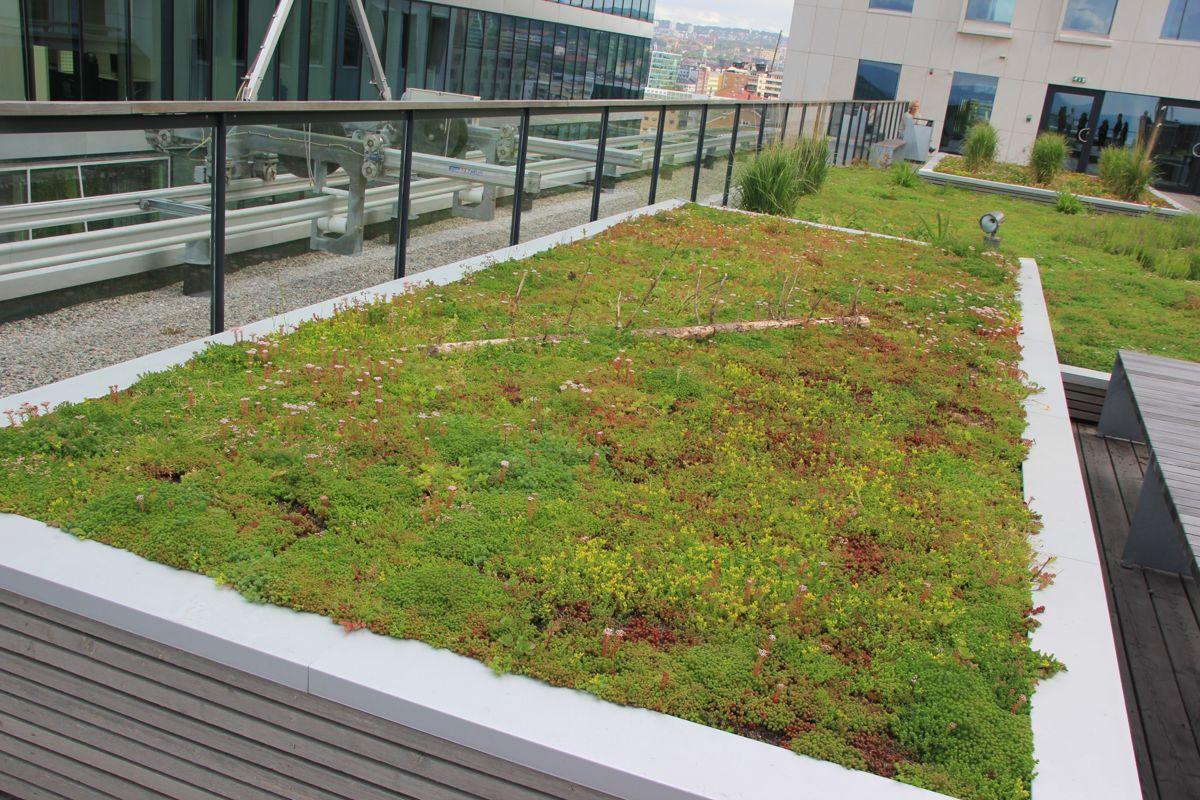 I Barcode-rekken i Bjørvika har flere av byggene grønne tak. (Arkivfoto: Svanhild Blakstad)