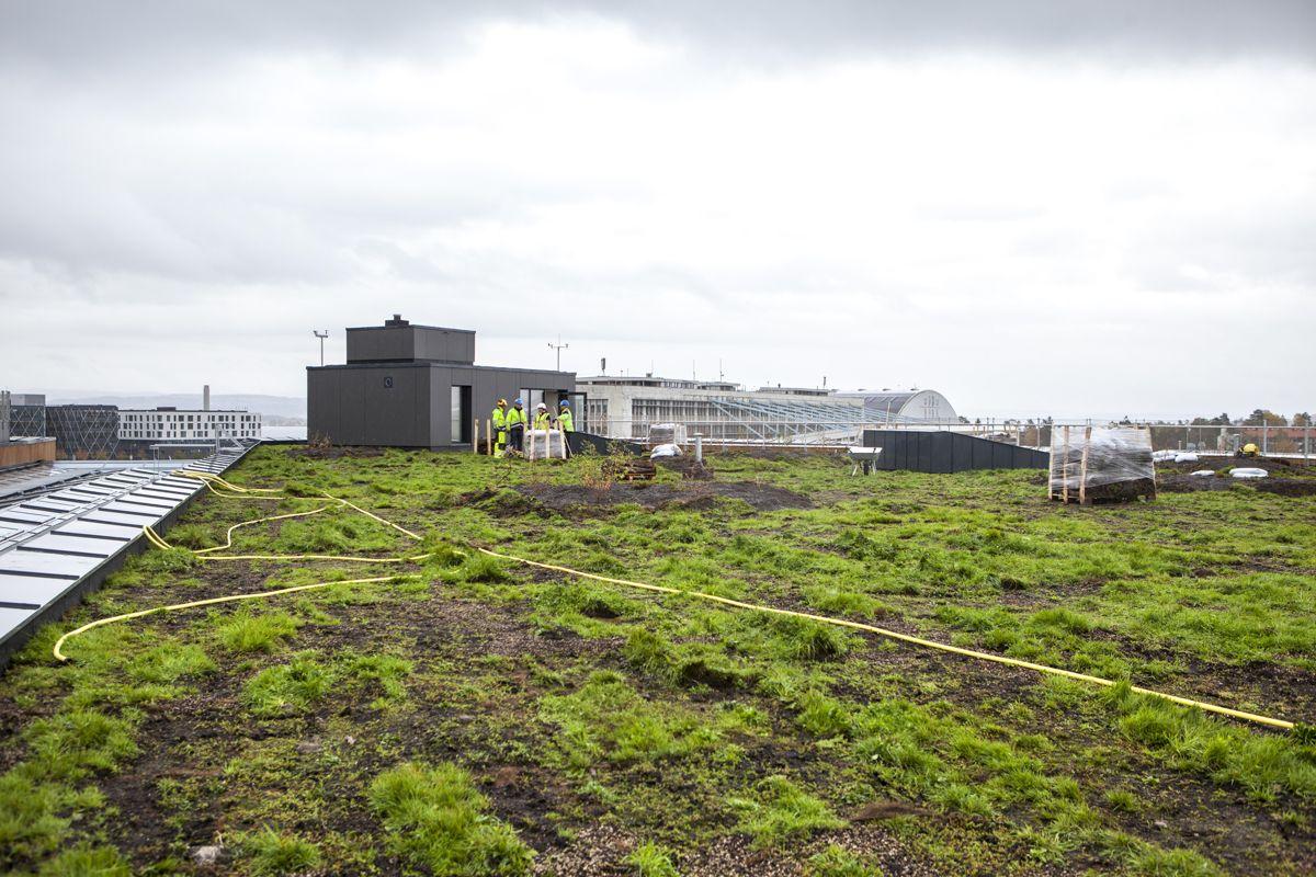Miljøtaket på Fornebu S. (Foto: Tor Lie)