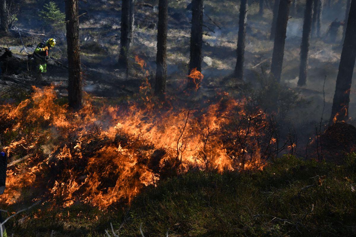 Ilden tok godt tak i tørr skogbunn. Foto: Arne Heggland