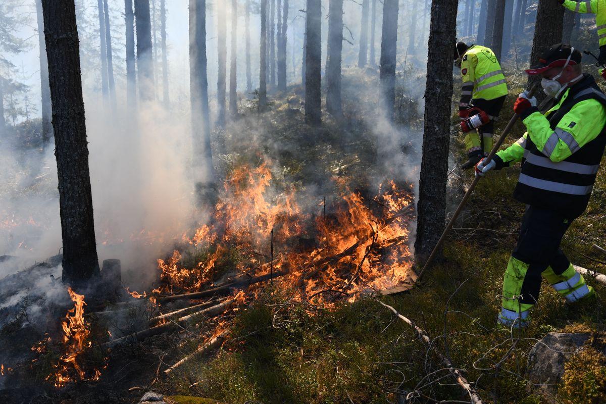 Notodden brannvesen hadde god kontroll på skogbrannen som var en øvelse. Foto: Arne Heggland