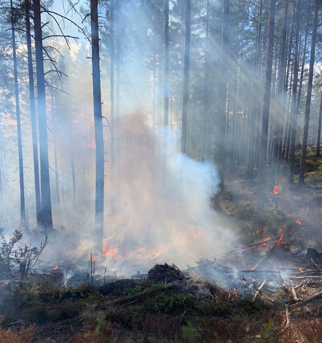 Kontrollert skogbrann er aktuelt miljøtiltak der ny E134 skal bygges mellom Kongsberg og Notodden. I forrige uke øvde brannvesenet i området med Statens vegvesen som interessert observatør. Foto: Kjell Wold