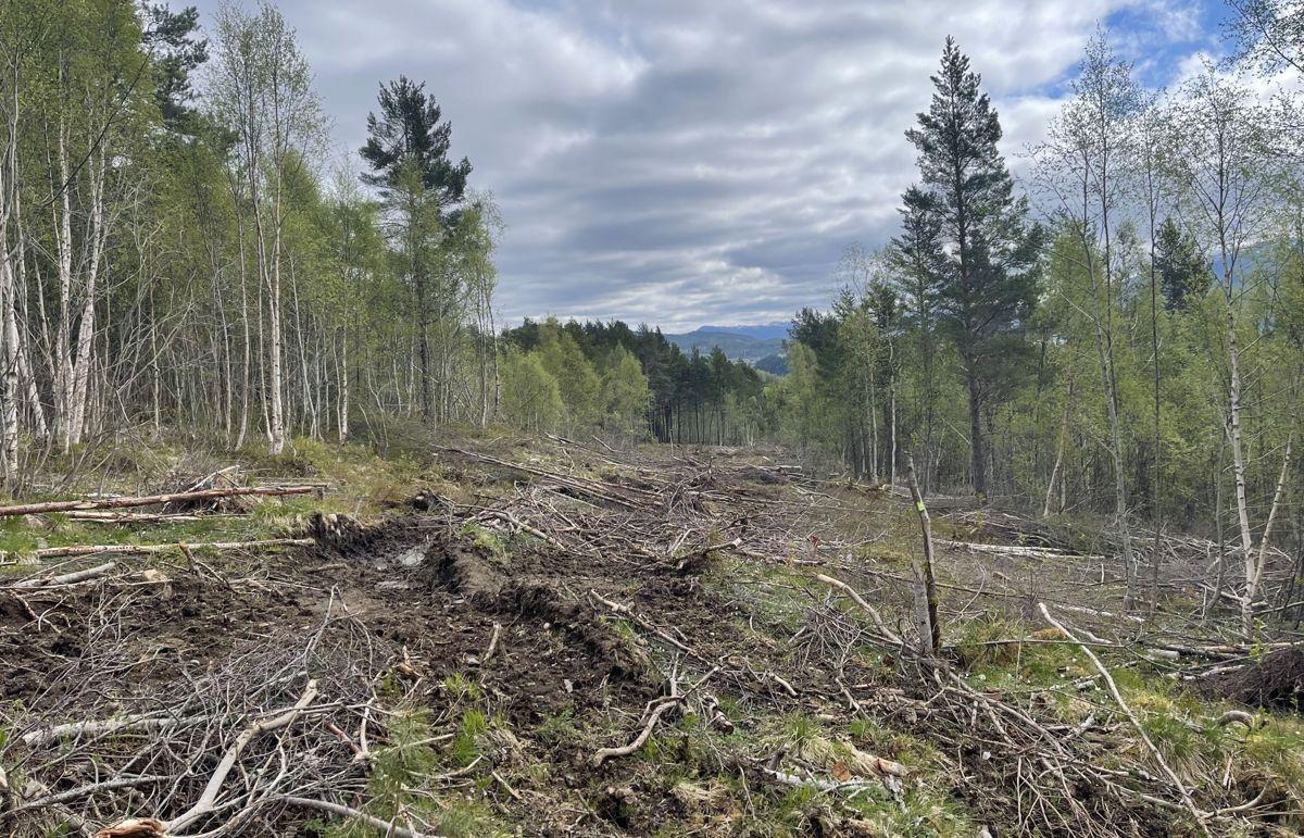 Fra skogrydding for landbruksveien som skal gå parallelt med ny E39 nord for nyveien. Foto: Andreas Eidem, Statens vegvesen