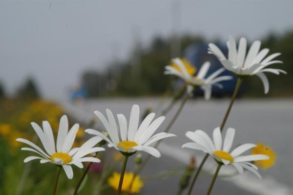 Illustrasjonsfoto: Knut Opeide, Statens vegvesen