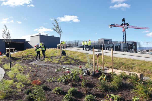 Oslo kommune ønsker flere grønne tak og fasader i byen. Dette bildet er fra åpningen av Nord-Europas største takhage med spiselige vekster på Økern Portal. Foto: Svanhild Blakstad