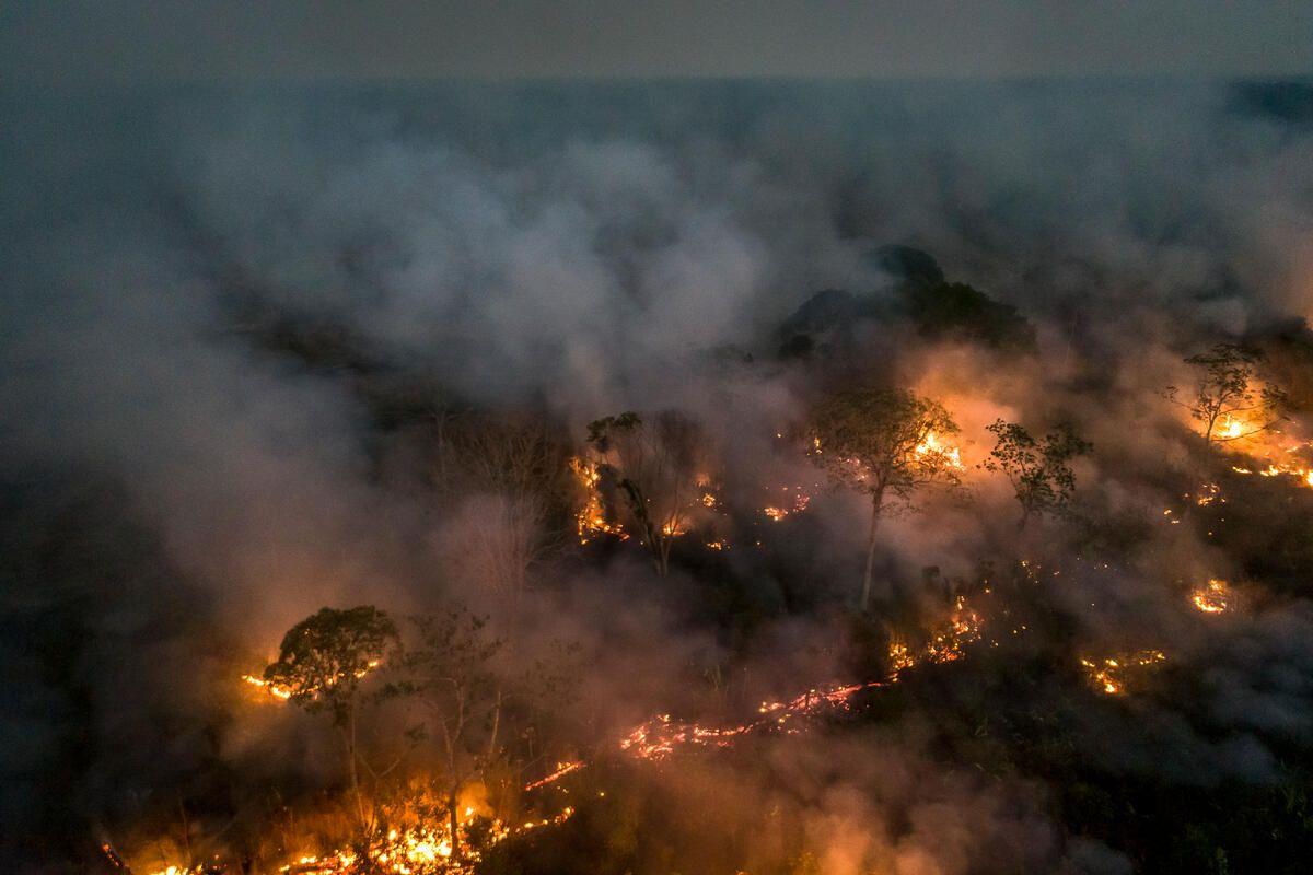 Ødeleggelsene i Amazonas sto alene for en betydelig nedgang i klodens biokapasitet i fjor. Foto: Andre Dib / WWF-Brazil Ødeleggelsene i Amazonas sto alene for en betydelig nedgang i klodens biokapasitet i fjor. Foto: Andre Dib / WWF-Brazil