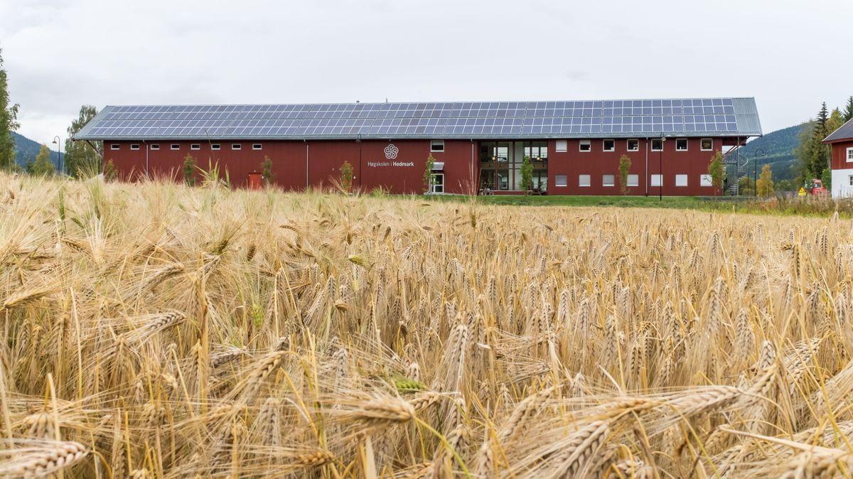 Campus Evenstad ligger mellom Rena og Koppang, og er en avdeling under Høgskolen i Innlandet. Foto: Statsbygg