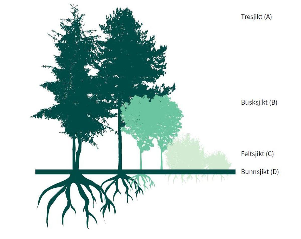Gatenormalen ber om flersjiktet vegetasjon der det er hensiktsmessig, fordi  flersjiktet vegetasjon kan levere flere økosystemtjenester. Illustrasjon: Cowi