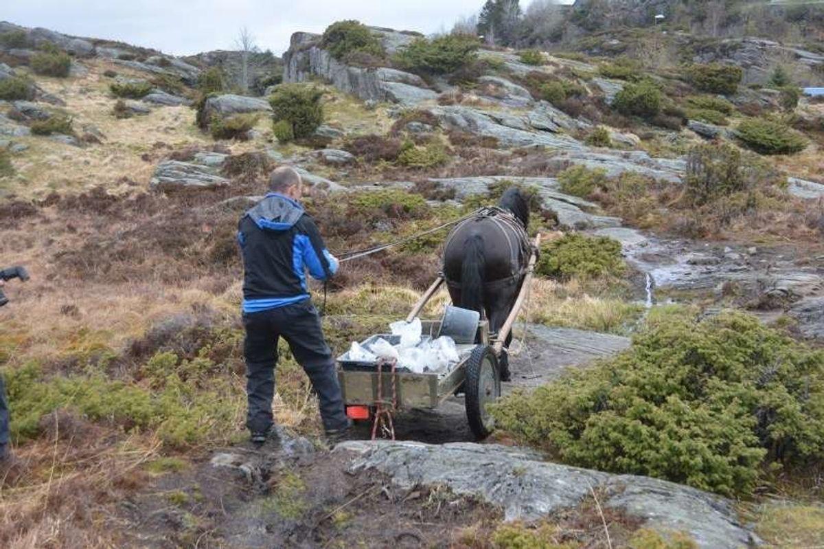 Betong-leveranse med hest til fastmerke for Sotrasambandet ved Kolltveit i Fjell. Foto: Geir Brekke