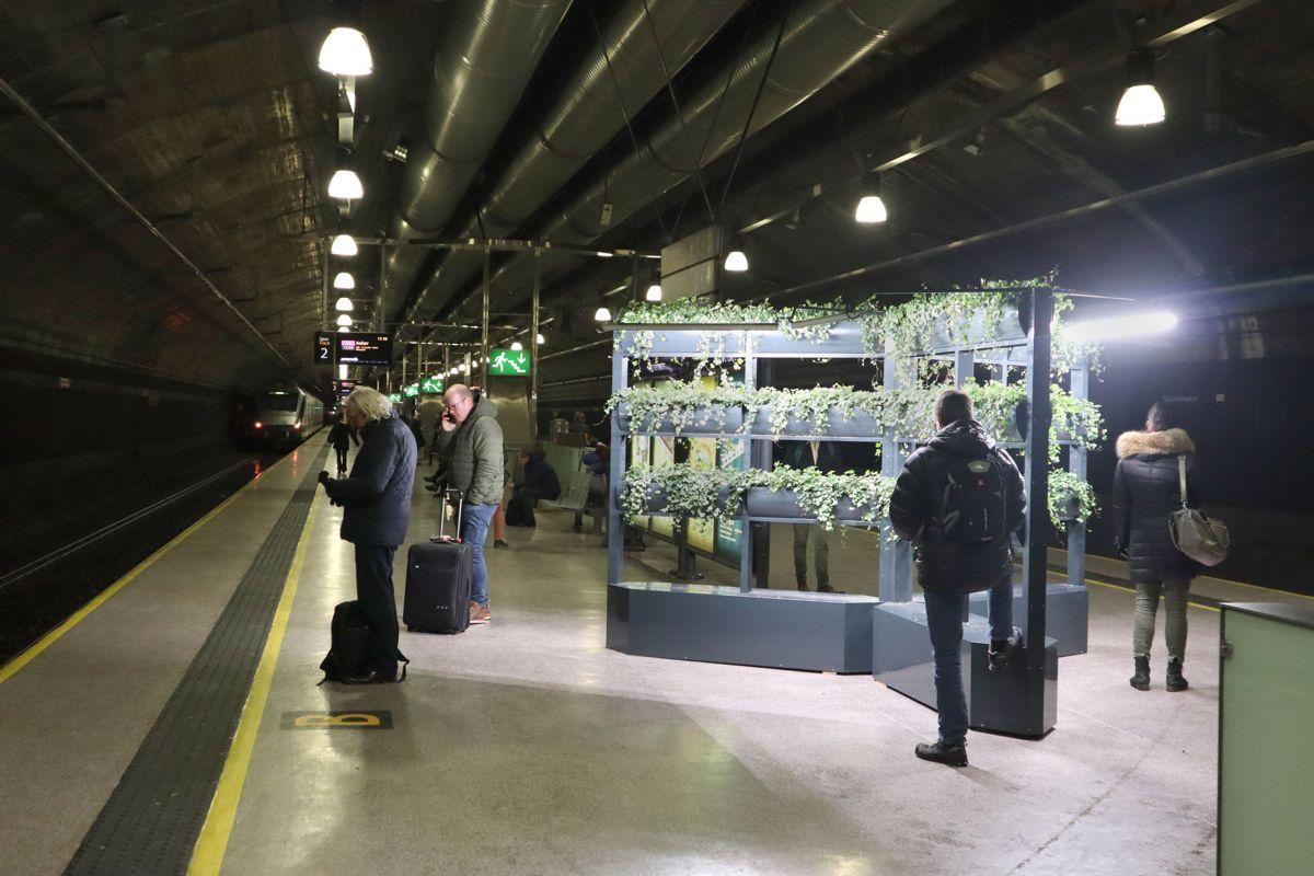 Planteveggen på togplattformen er at naturlig blikkfang for de reisende. På sikt kan installasjonen utvides med sittebenker og info- eller reklameboards. Foto: Svanhild Blakstad