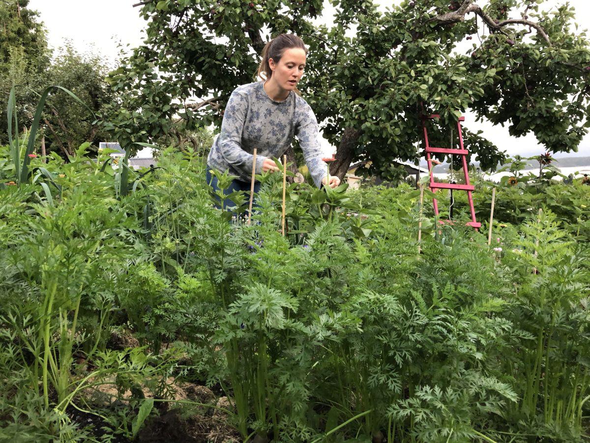 DYRK DET DU VIL SPISE: Hobbydyrkeren Maria har ulike strategier for å være selvforsynt med grønnsaker. – Noe av det viktigste er å dyrke det du vil spise – og å spise det du dyrker, sier hun. Her er hun i gulrotåkeren.