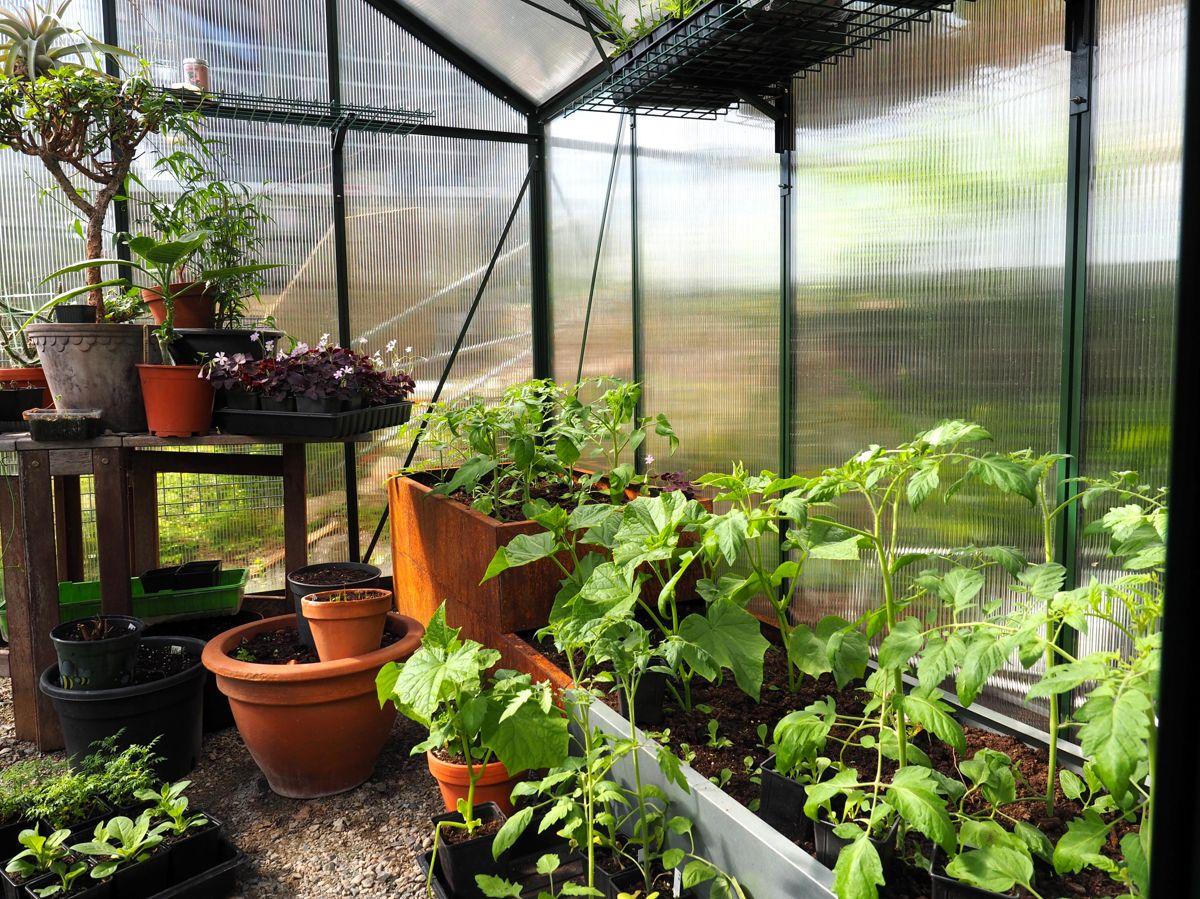<p>Klimaet i drivhuset kan gi en eksplosiv vekst. Med smarte løsninger kan du utnytte plassen maksimalt slik at du får plass til alle vekstene du ønsker deg. Foto: Skarpihgen.no</p>