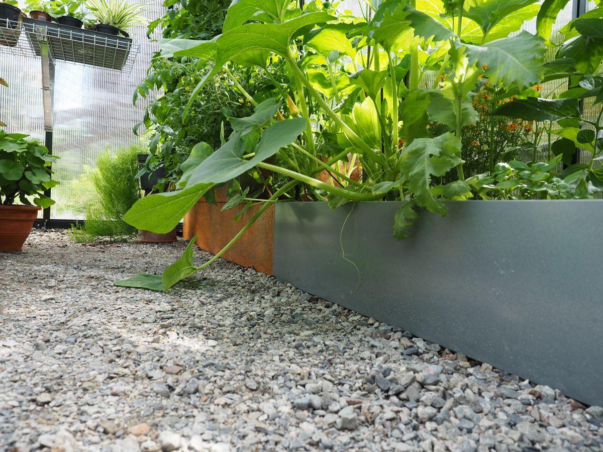 Med permanente bed får du stort jordvolum. Har kan store tomat- og agurkplanter utfolde seg fra gulv til tak og utnytte høyden maksimalt. Foto: Skarpihagen.no