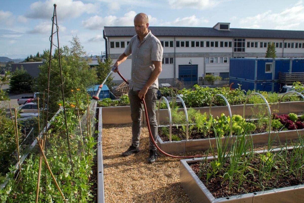 <p></p><p>– Vi opplever at forestillingen om å dyrke mat på eget tak skaper begeistring. På mattaket vårt tester vi ut et innovativt dyrkningskonsept, hvor vi skal undersøke hva som må gjøres for at dette skal kunne bli en vanlig, akseptert løsning som passer flere ulike typer tak, sier anleggsgartner Sigurd Boasson i Svein Boasson AS.</p>