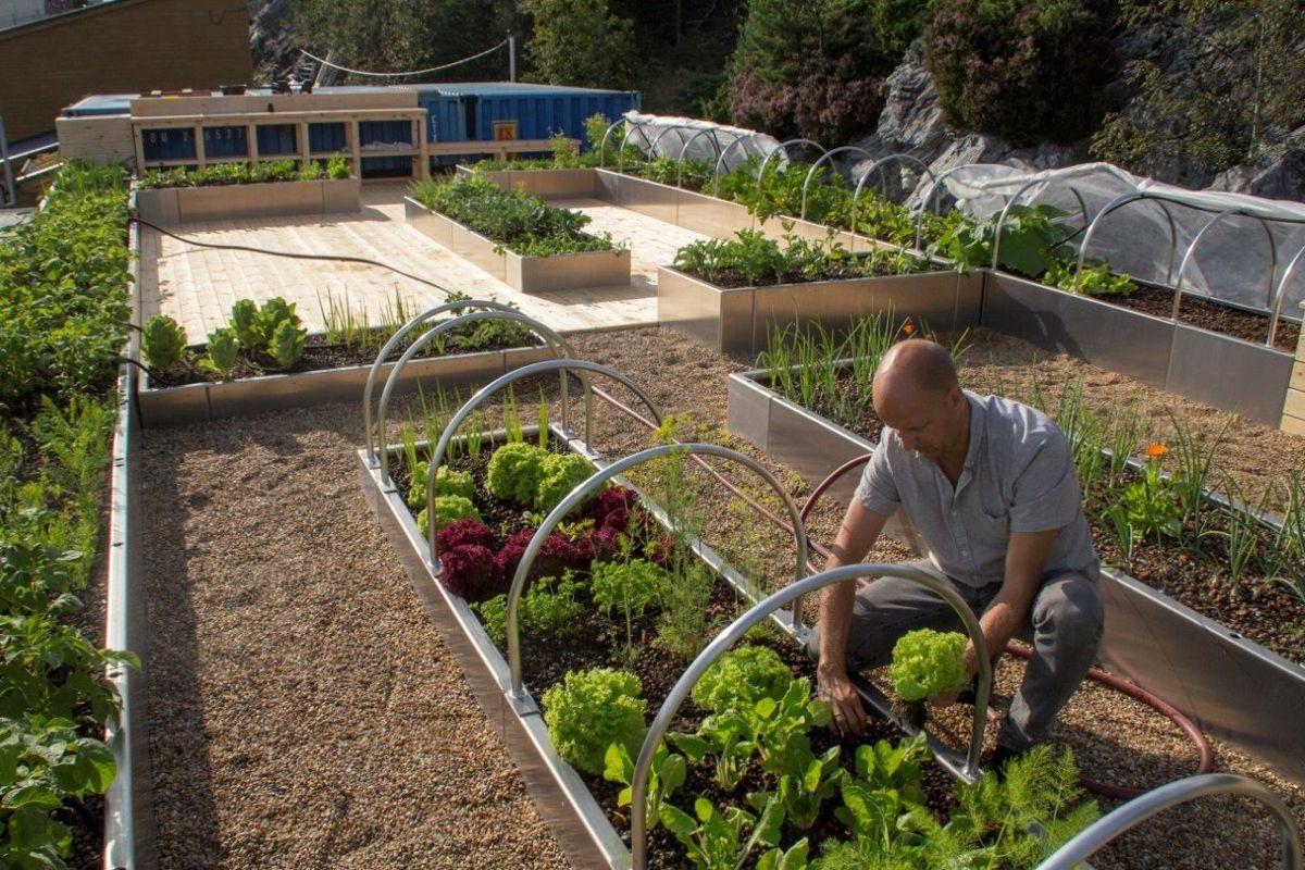 Daglig leder og anleggsgartner Sigurd Boasson skjøtter plantene på mattaket hos Svein Boasson AS i Bergen. Foto: Boasson