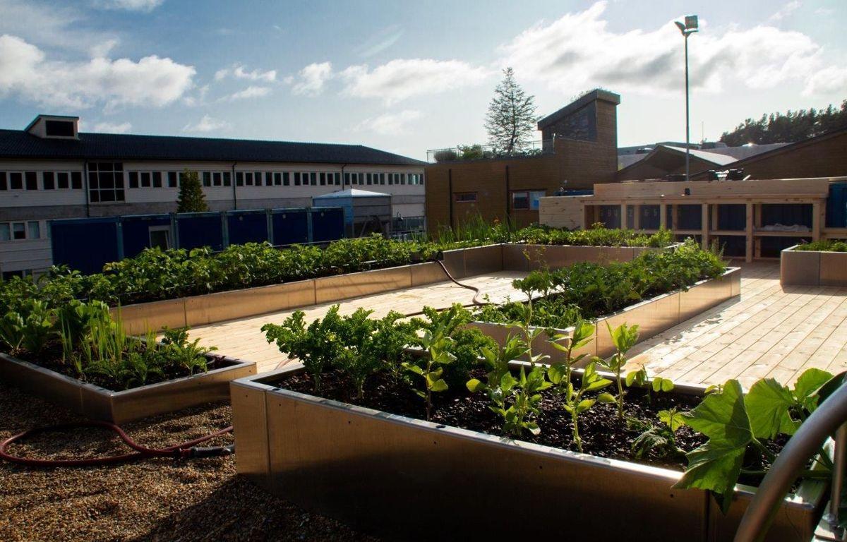 På taket komposteres alt av organisk avfall som ikke er mat og brukes til gjødsling og jordforbedring. Foto: Boasson