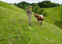 <p>Arbeidet med kommunedelplaner for natur har blant annet gitt status til artsrike ravinedaler som tidligere ble referert til som «hulla», ifølge Sabima.</p>