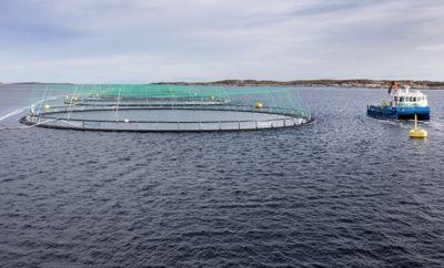 Ingen kommuner i landet har forbedret sitt netto driftsresultat så mye som Frøya i Trøndelag. Takket være utbetalinger fra Havbruksfondet var resultatet vesentlig bedre i fjor enn året før.