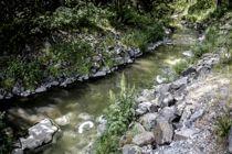 <p>Mange kommuner ivaretar ikke sine plikter som forurensningsmyndighet for små avløpsanlegg, viser landsomfattende tilsyn. Utslipp av avløpsvann kan få gjøre stor skade på miljøet, som her i Engerbekken i Indre Østfold.</p>