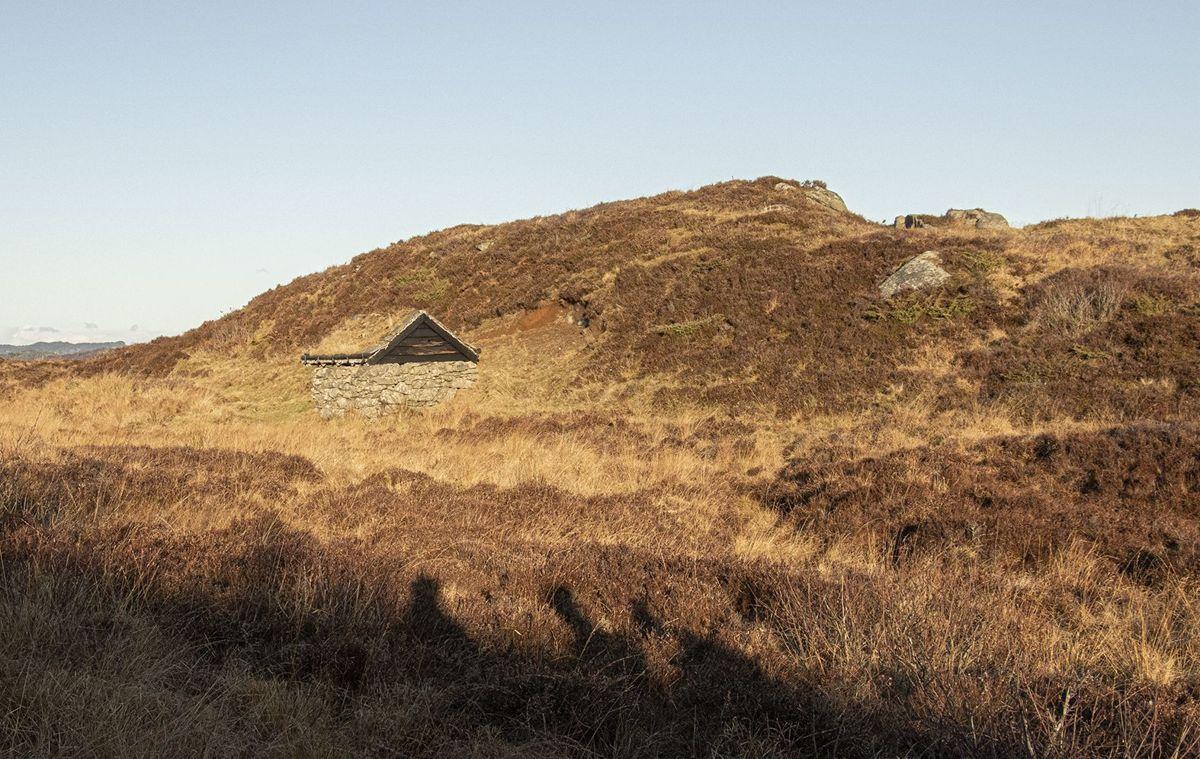 Røsslyng finnes langs hele kysten. På øya Lygra i Lindås forsker biologer på hva som skjer med lyngheiene langs kysten når klimaet endrer seg raskt. – Kystlynghei er viktig her hos oss, vi har mye av det, og det er viktig at alle verdsetter den, mener ordfører i Hvaler, Mona Vauger (Ap).