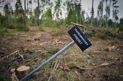 I Trandumskogen ble 194 mennesker henrettet av tyskerne under krigen og lagt i massegraver. Stedet er fredet og utgjør et av landets viktigste krigsminnesmerker. Slik har Forsvarsbygg behandlet området.