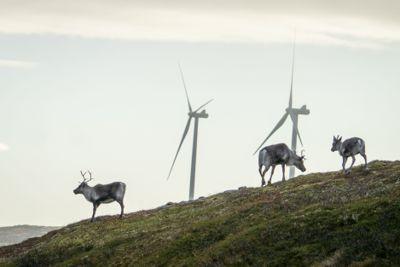 Storheia vindpark er den største av vindparkene til Fosen Vind, og den andre av vindparkene som ble bygget. Da den ble overført til ordinær drift i februar 2020 var den Norges største med 80 turbiner og en installert effekt på 288 MW.