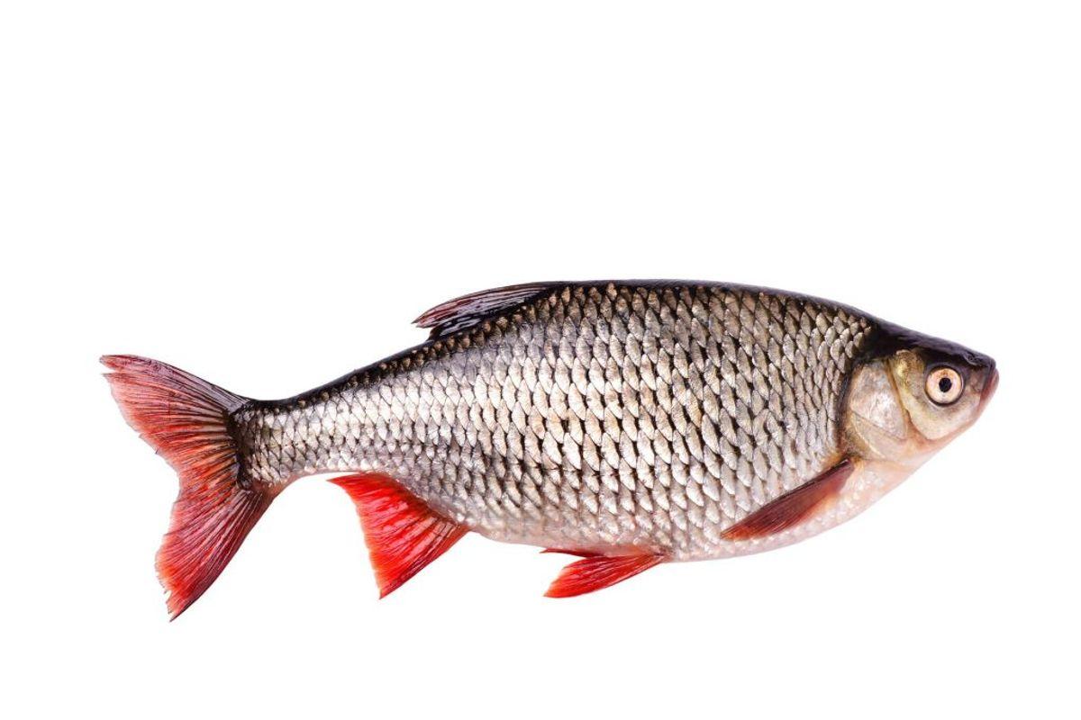 Fisk. Foto: Scanpix.