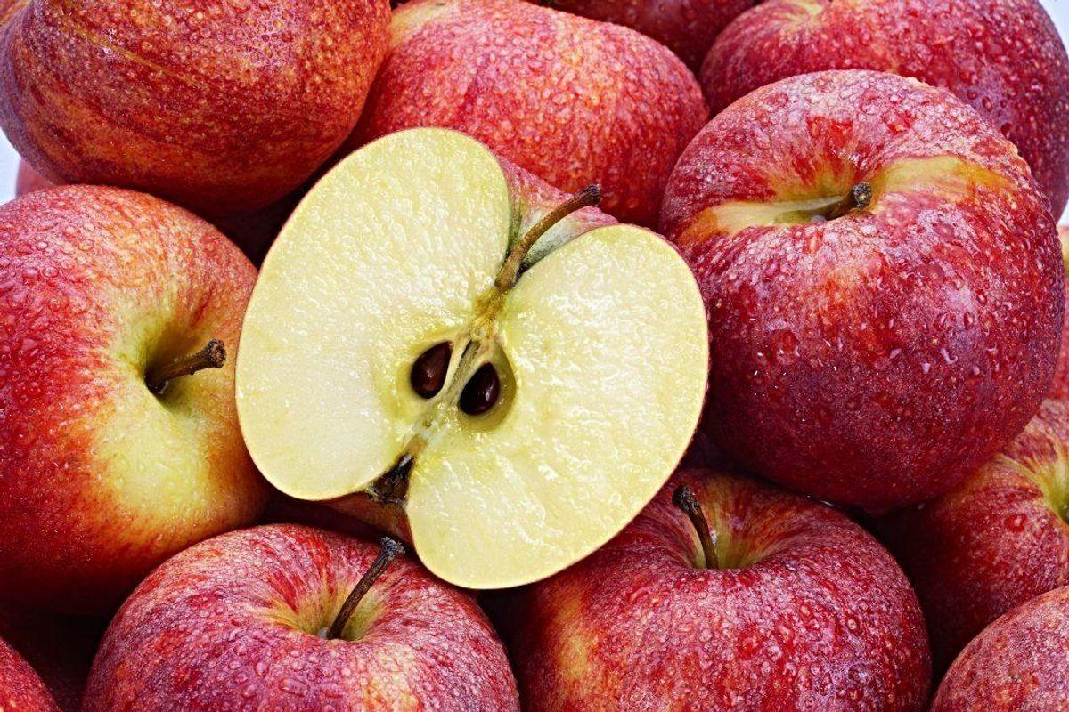 Æblekerner, kirsebærsten, abrikossten og blommesten indeholder cyanid, som er giftigt for hunde. Foto: Scanpix