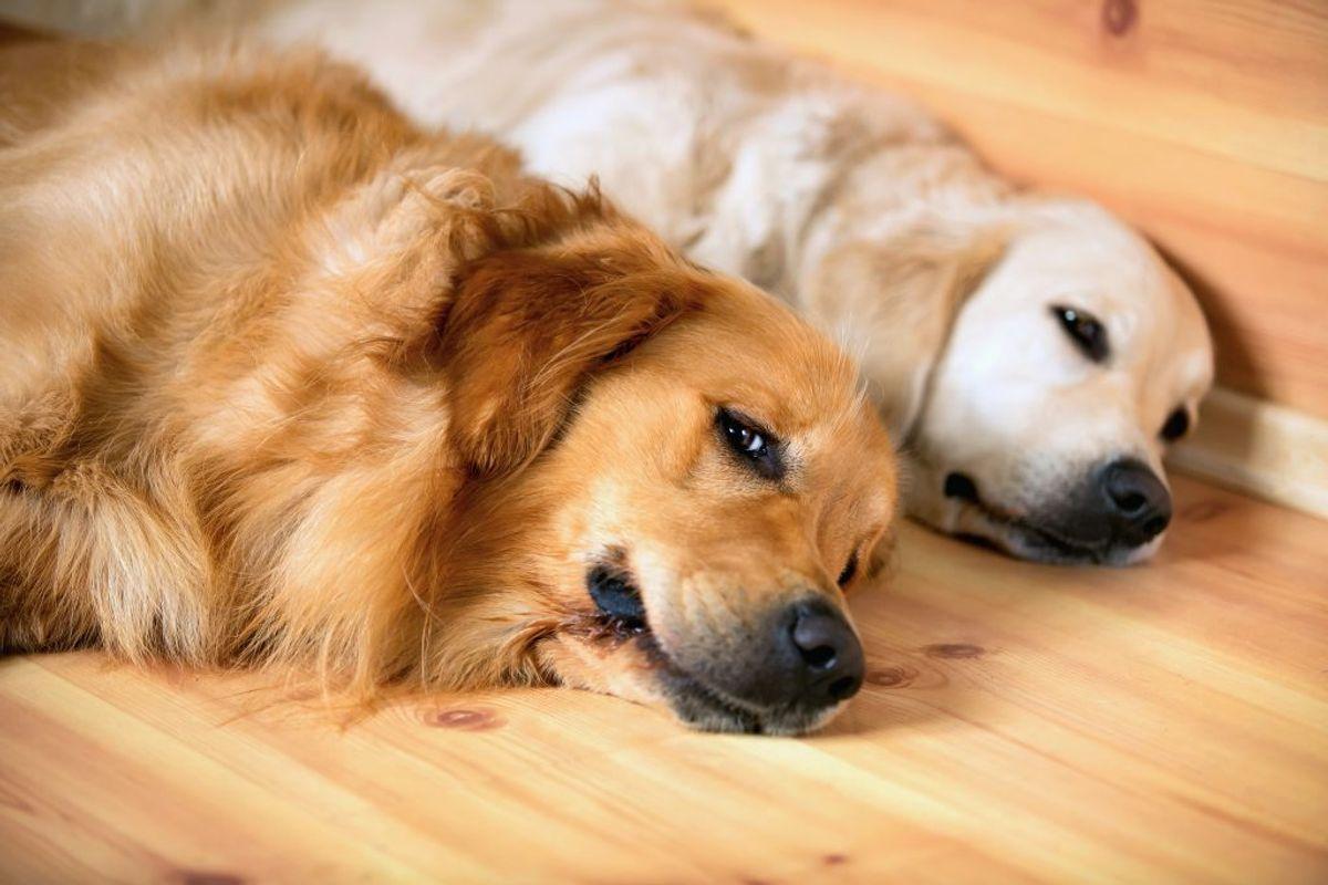 Træn hunden når den er træt – det kan være lige efter en gåtur. Foto: Colourbox.