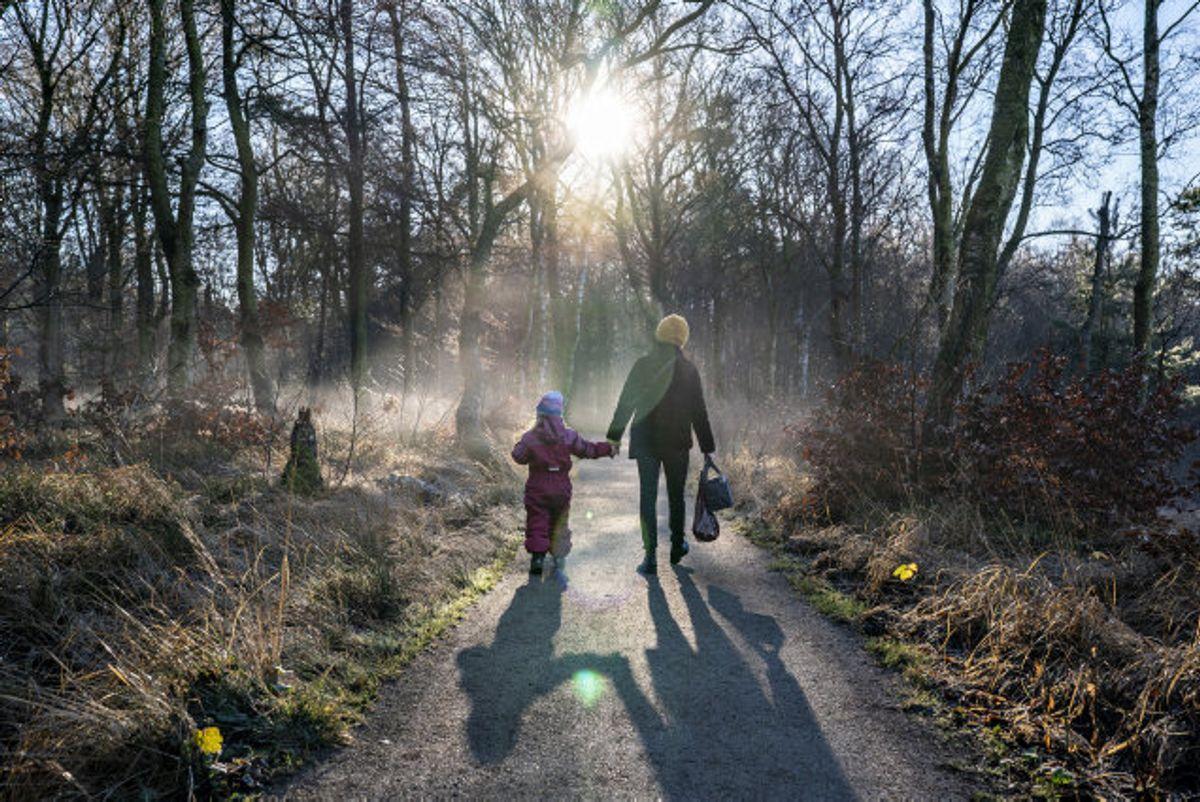 Cirka 70 procent af de danske skove er privatejede. Der er mere restriktive regler for færdsel i private skove end i offentlige skove. (Arkivfoto). Foto: Henning Bagger/Scanpix