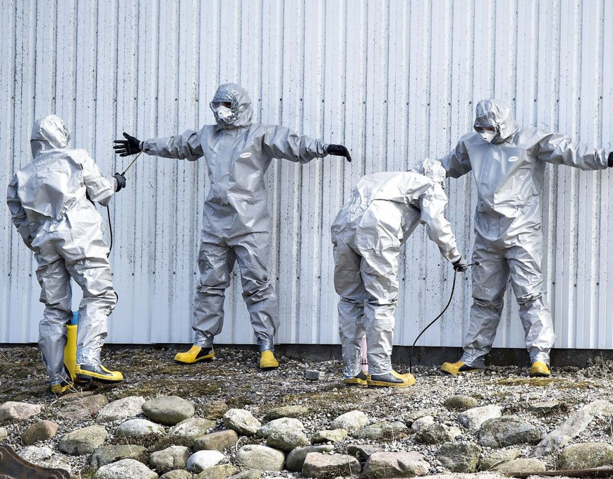 Beredskabsfolk i sikkerhedsdragter står for aflivningen, når der konstateres fugleinfluenza i Danmark. (Foto: Henning Bagger/Scanpix)