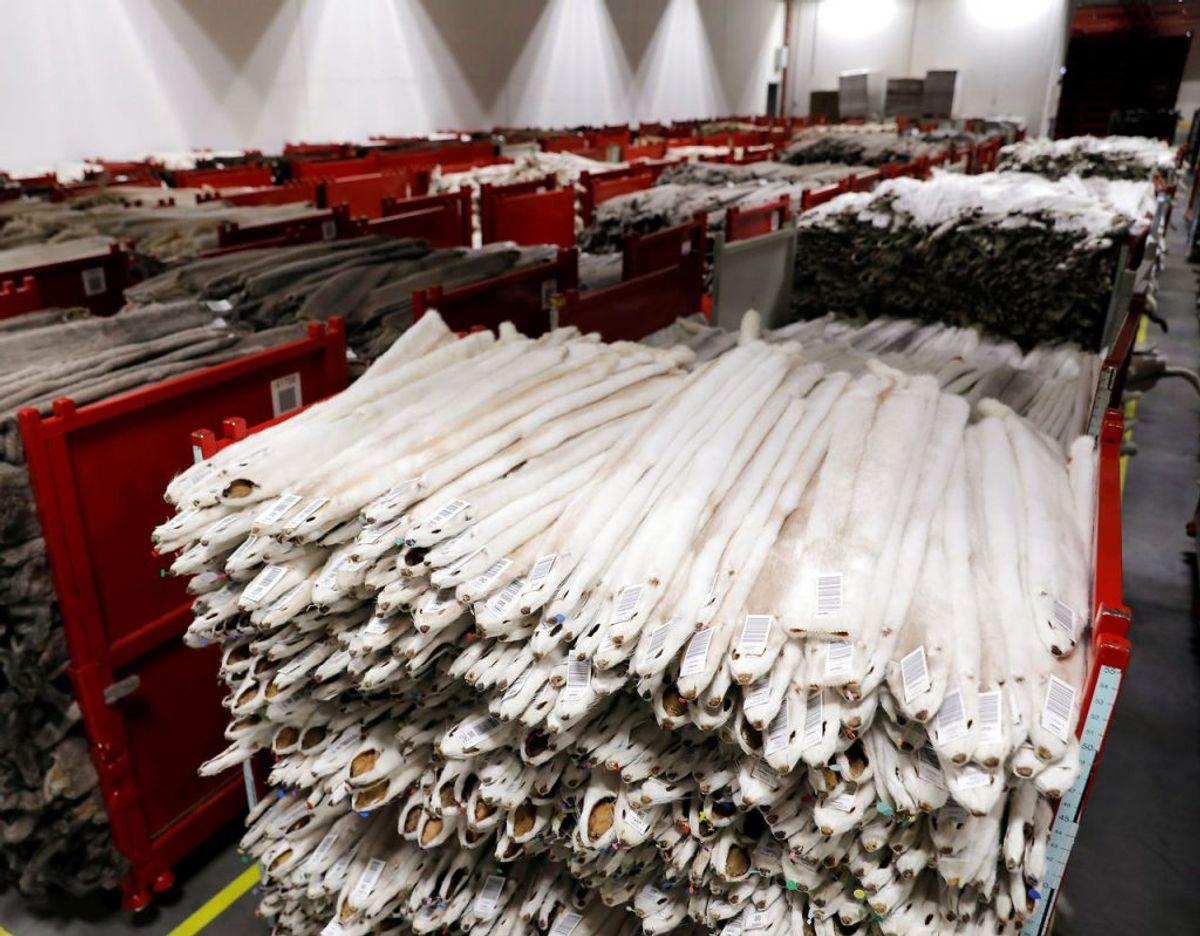Hos Kopenhagen Fur sælger man millioner af danske minkskind. Foto. Scanpix