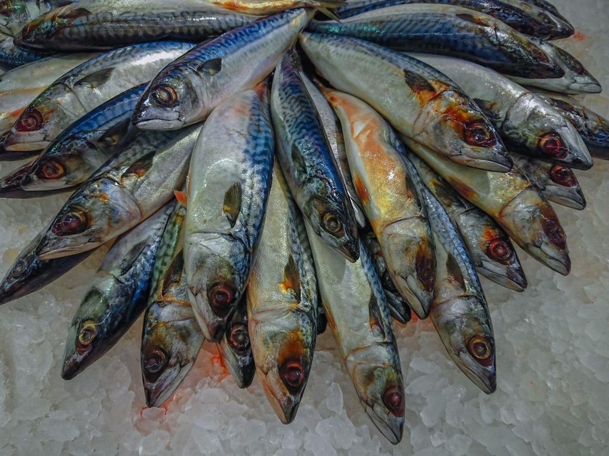 200 gram makrel. (Foto: Shutterstock)