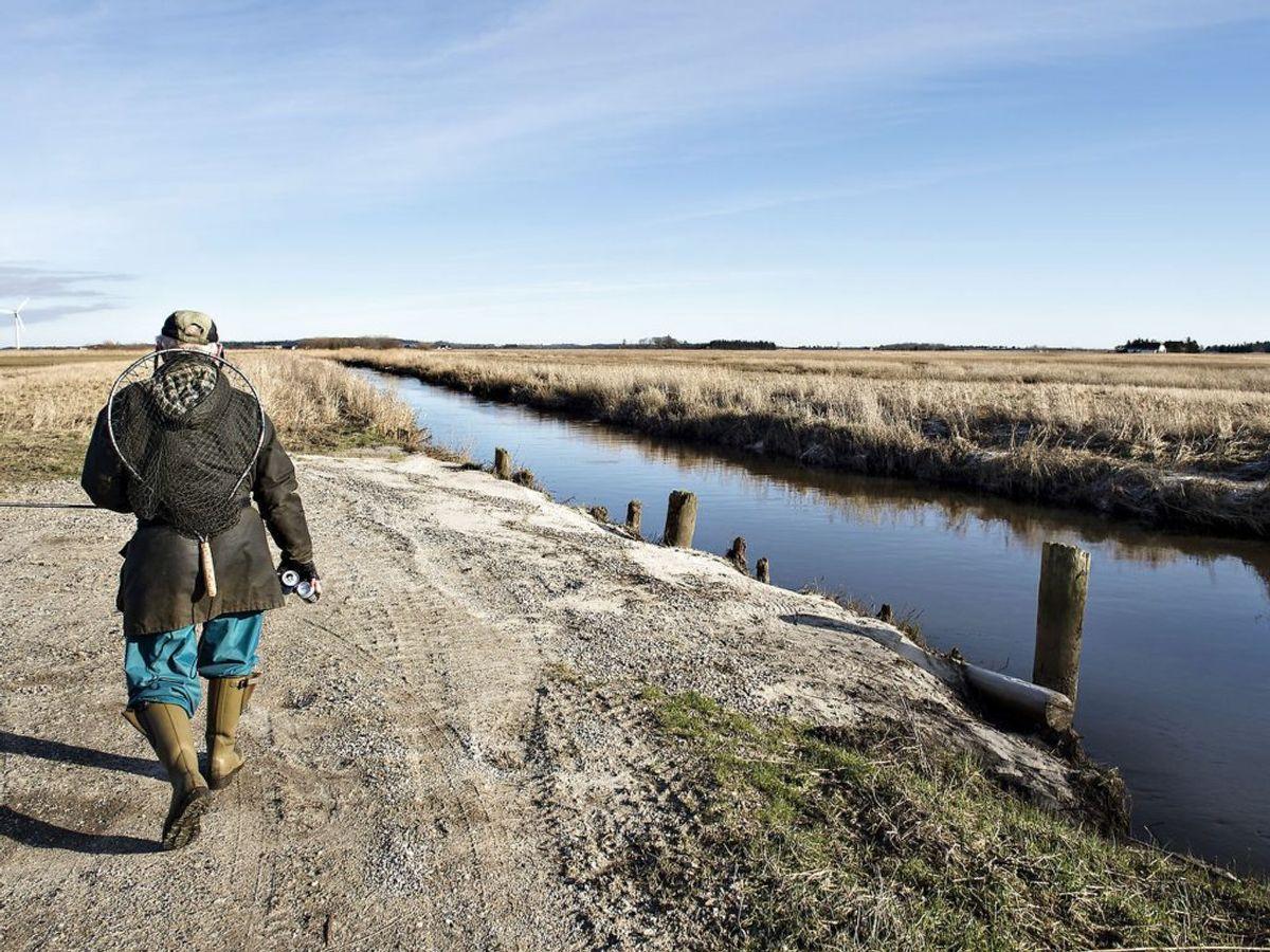Grundvandet er tæt på overfladen – fremover stiger det endnu mere (Foto: Henning Bagger/Scanpix)
