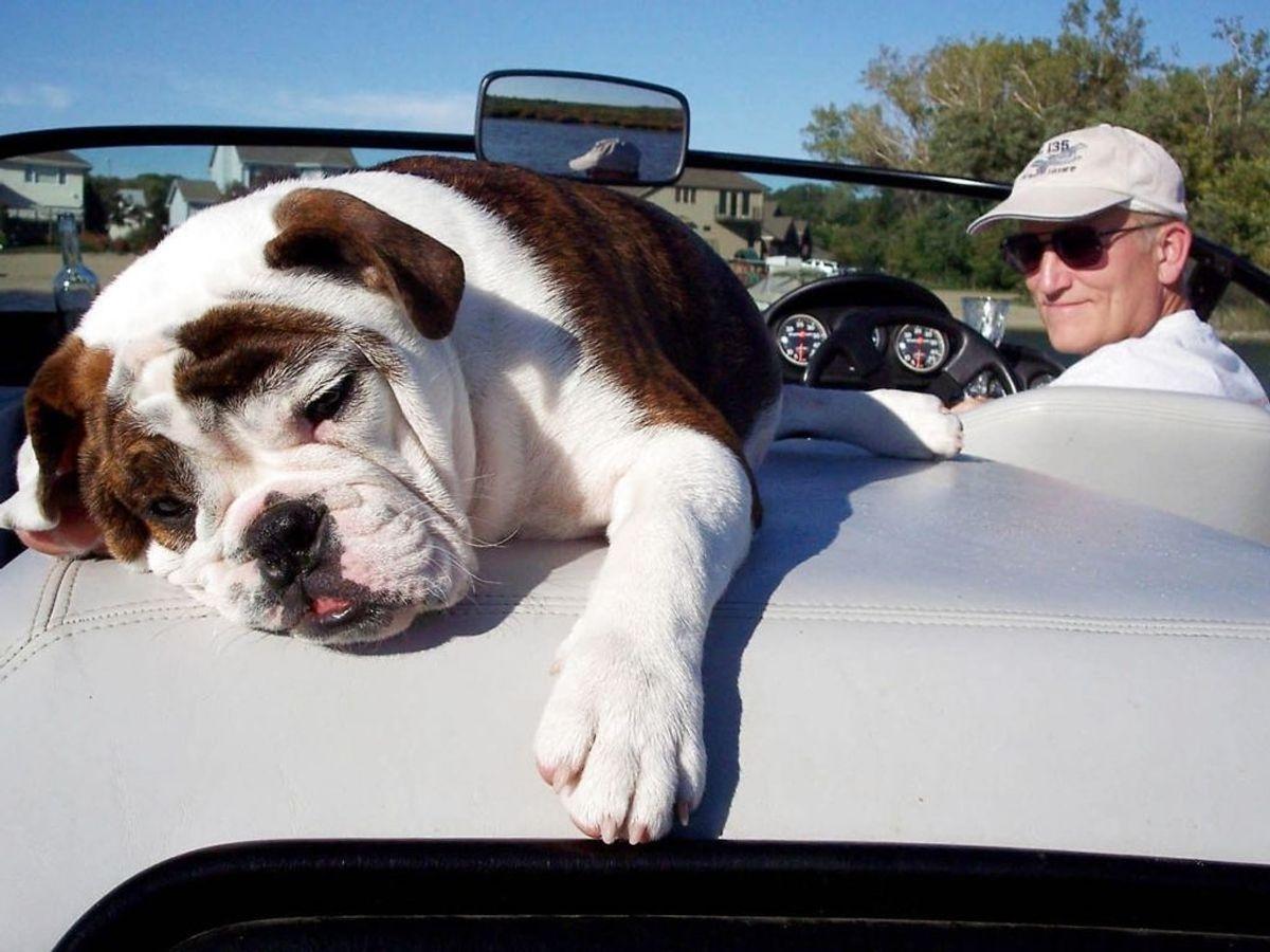 Randy Gurchin og hans old English Bulldog, Lucy. Den race indtager 6. pladsen. Foto: Kelley Gurchin/Handout /Scanpix.