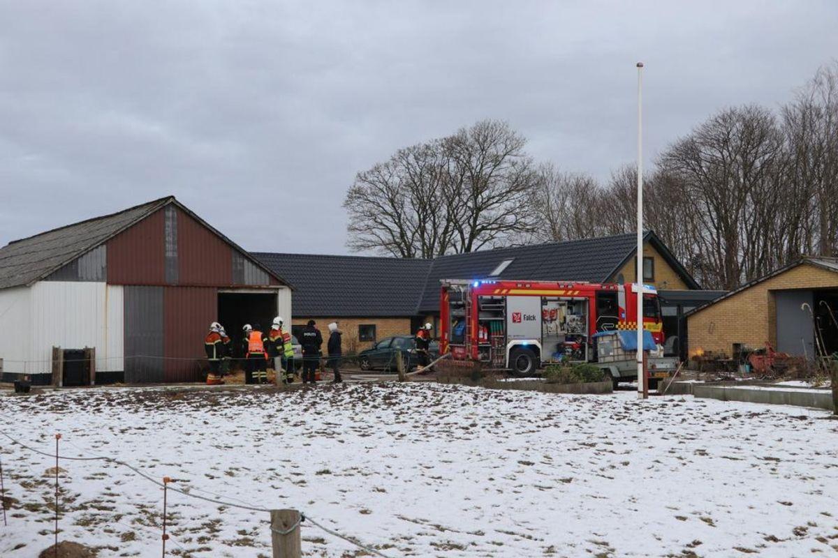 Det lykkedes ejeren at redde sit kvæg ud af en brændende stald. Foto: Øxenholt Foto.