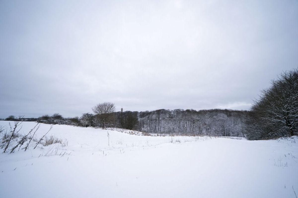 Snereportage fra Trekantområdet ved Kolding, torsdag den 4. februar 2021. Et snedækket naturområde lige uden for Kolding.. (Foto: Frank Cilius/Ritzau Scanpix)