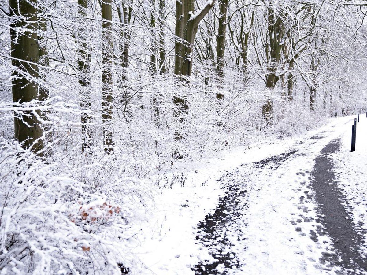 Det er ekstraordinært koldt her til morgen.  (Foto: Henning Bagger/Ritzau Scanpix)