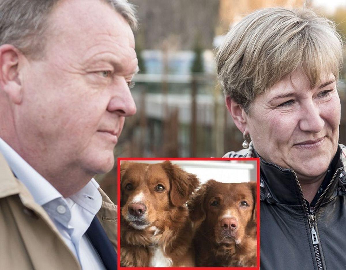 Lars og Sólrun Løkke Rasmussen mangler en af deres hunde. KLIK for mere. (Foto: Mads Claus Rasmussen/Ritzau Scanpix)