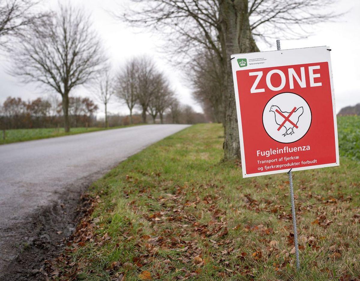 En fjervildtbesætning ved Løvel, nord for Viborg er ramt af den alvorlige fugleinfluenza H5N8. Det oplyser Fødevarestyrelsen. Foto: Bo Amstrup/Ritzau Scanpix
