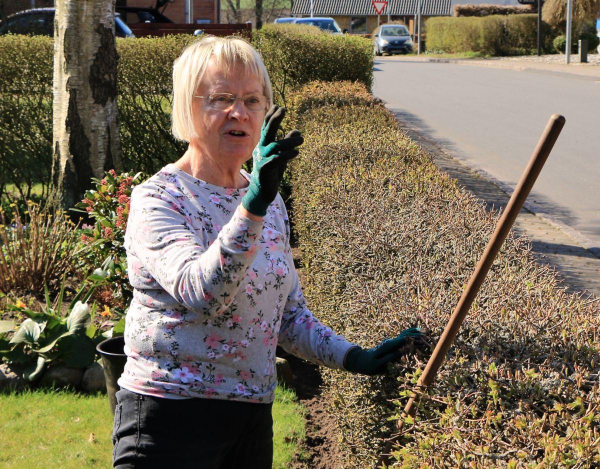 70-årige Inger Jepsen er lige som Bjarne Christensen plaget af den tunge trafik og godt og grundigt frustreret over situationen. Foto: Claus Jessen